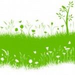 5 Fertilizantes ecológicos que puedes utilizar