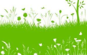 5 Fertilizantes ecológicos para el huerto: Propiedades y aplicación