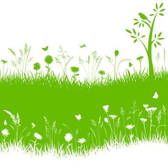 Abonos verdes para el huerto