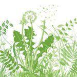Malas hierbas: prevención y métodos de control en cultivos ecológicos