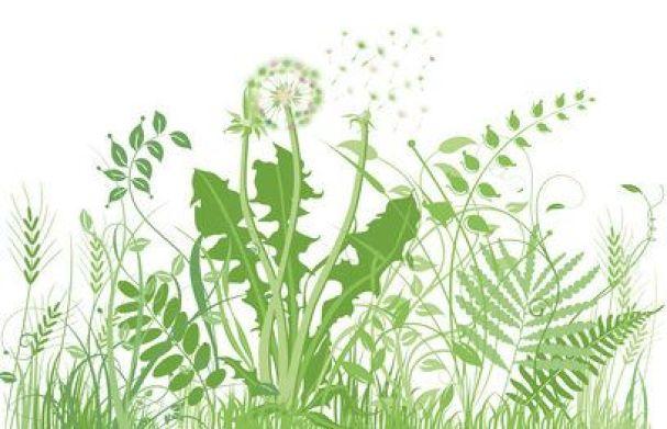 Controlar malas hierbas