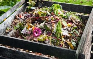 Qué es el compostaje. Condiciones y materiales para hacer compost