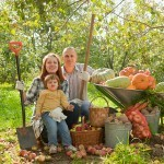 Asociación de Cultivos en el Huerto. Ventajas y asociaciones beneficiosas