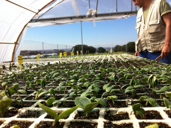 Cómo hacer una huerta: semilleros