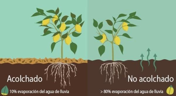 Beneficios del acolchado agrícola