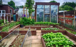 Planificar el huerto. 10 aspectos básicos para empezar a cultivar en casa