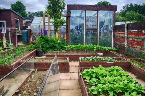 cómo cultivar un huerto en casa