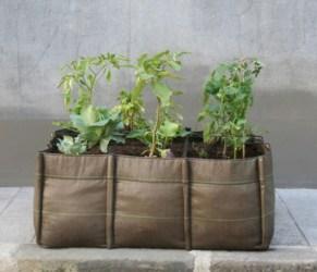 Problemas de plantas: 5 problemas de plantas en maceta