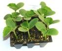 Cómo hacer un semillero paso a paso: Recipientes, semillas y sustrato