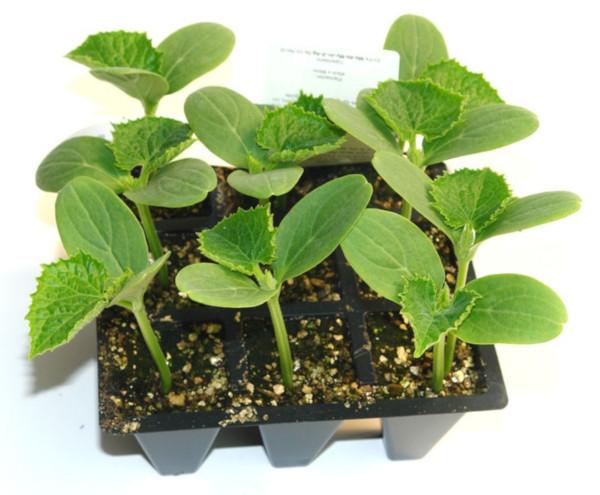 cómo hacer un semillero casero