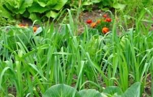 Abonar el Huerto Ecológico: 5 fertilizantes naturales y caseros
