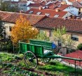Beneficios de los Huertos Urbanos | Guía Completa