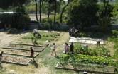 Huerto Ecológico en Agrónomos - La ETSIA y sus iniciativas ecológicas