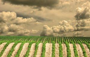 Rioja Tierra Viva - Regenerando la tierra