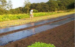 Manejo Ecológico de cultivos: El ejemplo de