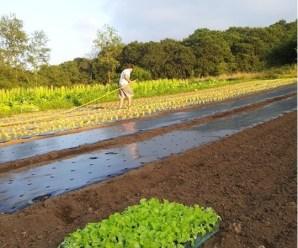 Manejo Ecológico de cultivos: El ejemplo de «Apadrina un Tomate»