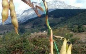 La Agricultura natural: Inicios, principios y variantes