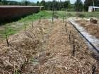 Qué es el Vermicompost: La labor de las lombrices en el compost