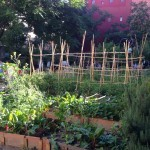 Qué plantas Cultivar en el Huerto
