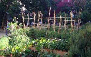 Qué plantas Cultivar en el Huerto: Consejos para principiantes