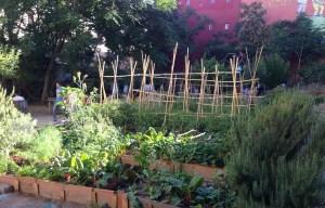 Qué Plantas Cultivar en el Huerto | Tipos de cultivos para huertos