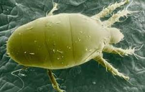 Araña Blanca en las plantas: Eliminar la plaga con Métodos Ecológicos