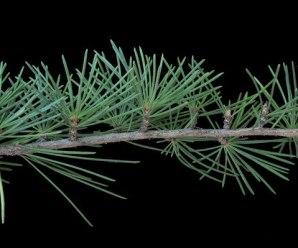 Glosario de Términos Botánicos (I)