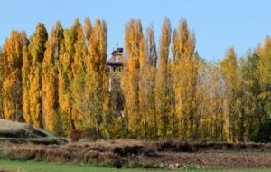 Árboles para el Huerto: cómo elegir el más adecuado