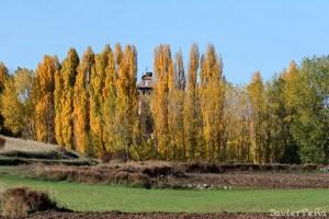 Qué Árboles poner en el Huerto: Cómo elegir el más adecuado