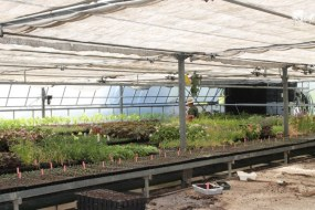 Cómo hacer un Semillero: Plantas Hortícolas y Aromáticas
