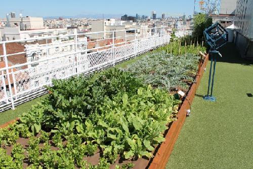 En el huerto del hotel Wellington es muy importante el cuidado de hortalizas.