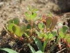 Cómo Eliminar Malas Hierbas en el Huerto Ecológico