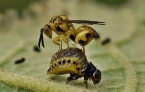 Enemigos Naturales de las Plagas en Huertos: Guía Completa