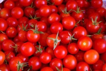 extraer las semillas de tomate