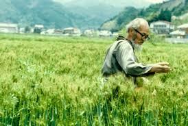 Masanobu Fukuoka en cultivo de cereal en su granja (Fuente: www.onestrawrevolution.net)