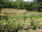 El huerto en Primavera: cuidados y consejos