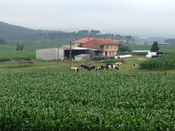 Perspectiva del paisaje agrario existente.