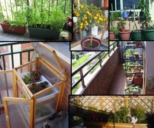 recipientes de cultivo para el mini huerto en el balcón