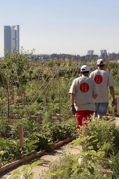 Trabajadores en la Huerta de Montecarmelo de la Fundación Carmen Pardo - Valcarce