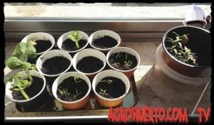 Semilleros Caseros para principiantes: Hacer semilleros paso a paso