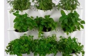 7 Plantas fáciles de cultivar. Plantas del huerto para principiantes