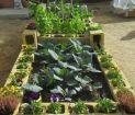 Mini Huerto ecológico: Cómo hacer un huerto urbano en casa