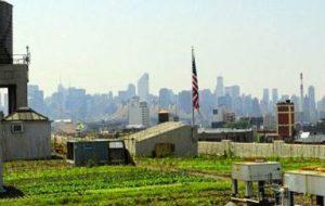 Huertos en azoteas: 7 tipos de huertos urbanos sobre edificios