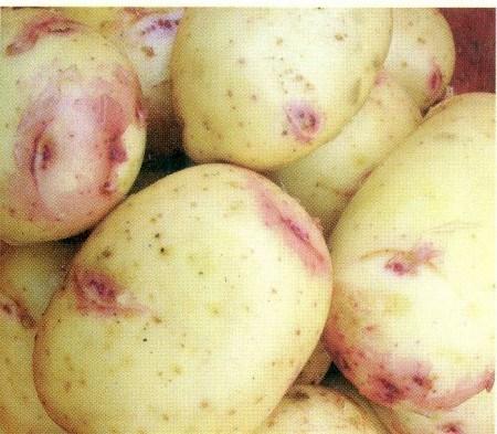 Las partes moradas de la imagen son las cejas de la patata. Fuente: cipotato.org