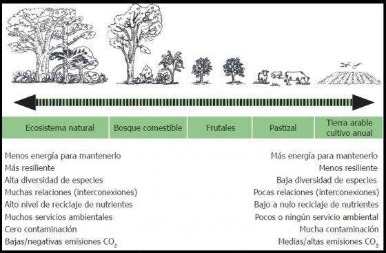 Aquí vemos una comparativa energética entre los diferentes sistemas agrícolas. Fuente: Manual bosque comestible. Cooperativa Las Cañadas 2011.