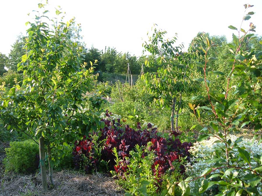 Un ejemplo de bosque comestible. Fuente: www.sergicaballero.com/cursos/curso-de-bosques-comestibles