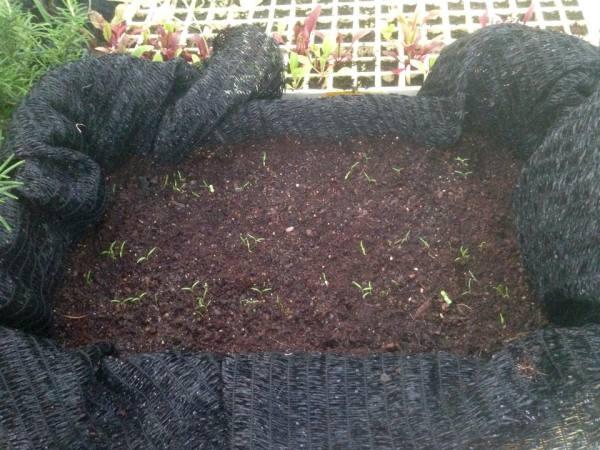 Fertilizantes ecológicos para el huerto