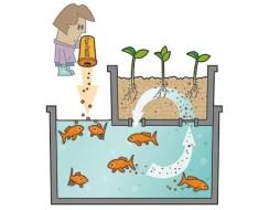 Acuaponía o cultivo con peces. Qué es, cómo funciona y ventajas