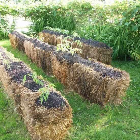 Podemos utilizar la paja tanto para hacer un acolchado como para cultivar sobre ella.