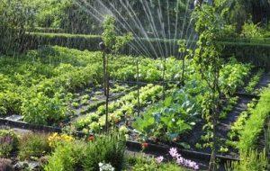 6 Tipos de riego para tu huerto o huerta y cuáles son sus ventajas